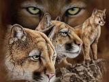Ломаем глазки - ищем зверюшек