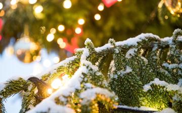 В Ахтме с Рождественской елки украли украшения