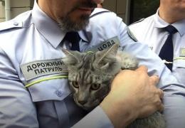 Сотрудники дорожного патруля спасли четырехмесячного котенка