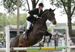 Союз конного спорта выступает за возможность перевозить лошадей через границу в Нарве