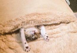 Коты отобрали хозяйскую грелку для ног