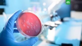Новый вирус способен убить 80 миллионов человек за несколько дней