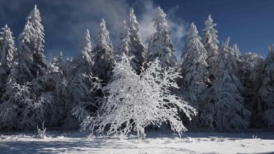 Аномальные холода в Европе: в Польше и Италии погибли приблизительно 20 человек