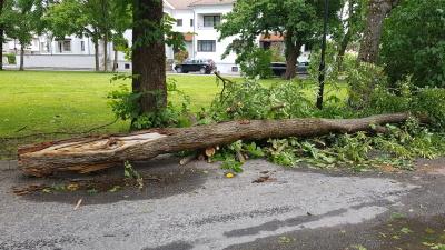 Последствия шторма: почти 10 000 домохозяйства все еще обесточены