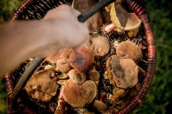 На телефон горячей линии по отравлениям после употребления в пищу грибов звонили уже 10 раз