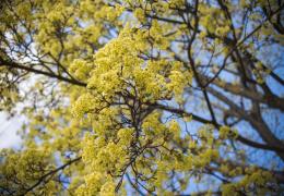 Синоптики: тепло придет в Эстонию во второй половине апреля