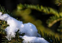 В Таллинне и Нарве 16 февраля был побит температурный рекорд