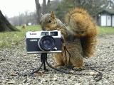Белки фотолюбители
