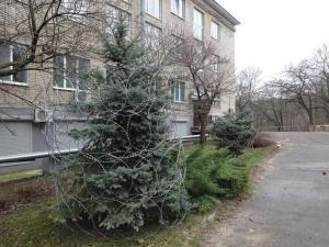 Лучший способ защиты елок от вандалов