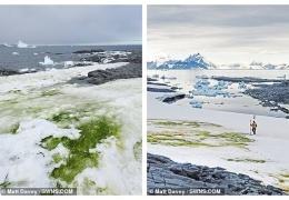Антарктида начала зеленеть