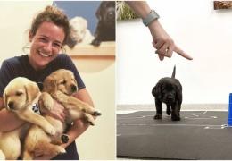 """Ученые доказали: собаки с рождения """"запрограммированы"""" на общение с человеком"""