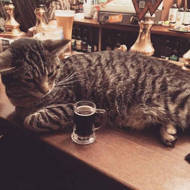 Кошачий паб в Бристоле