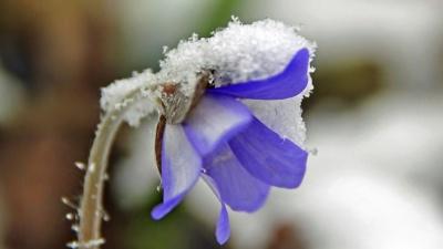 Восьмого марта синоптики обещают в Эстонии мокрый снег и дождь