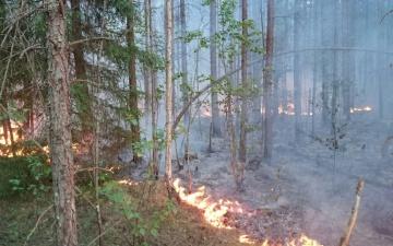 Высокий уровень пожароопасности сохраняется только в Йыгеваском и Ида-Вируском уездах