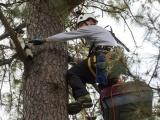 Американский пенсионер шустро лазает по деревьям, бесплатно спасая котов
