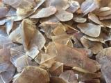 В Китае у браконьеров изъяли 12 тонн чешуи панголинов