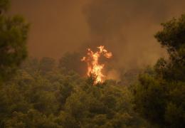 """Исследователи разработали """"вакцину"""", предотвращающую лесные пожары"""