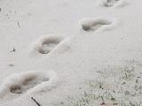 ФОТО: на Сааремаа выпал первый снег