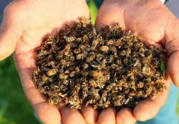 За 3 месяца в Бразилии погибло около 5 миллионов пчёл