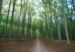 Ида-Вирумаа в 2018 году станет лидером по лесопосадкам