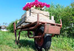 Россия запретила ввоз голландских цветов без лабораторной экспертизы