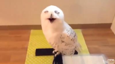 Смеющаяся сова