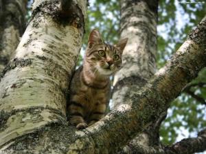 Кот просидел на дереве целую неделю