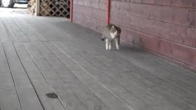 Кошка решила что она лошадка =)
