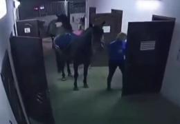Инцидент с лошадью и дверью
