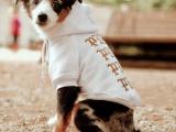 Дизайнеры придумали модную одежду для собак