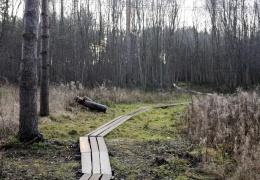Приговор вступил в силу: убийца школьницы Дарьи проведет в тюрьме 13 лет