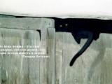 Цитаты знаменитостей о кошках