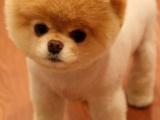 Самая популярная собака на Facebook