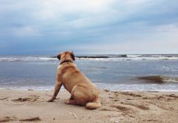 Синоптик: теплая вода с пляжей Таллинна отгоняется ветром в Финляндию из-за эффекта Кориолиса