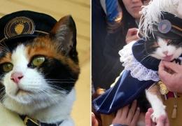 Тама - кошка-самурай и начальник станции, спасшая японскую железную дорогу