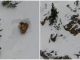 Пёс застрял над обрывом и вырыл себе пещеру
