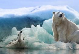 Температура в Антарктике бьет все рекорды