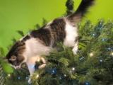 Классные фотографии котов