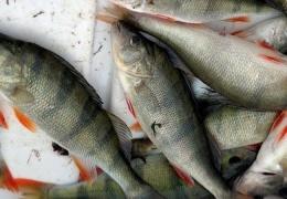 В Эстонии хотят ввести дневной лимит для рыбаков-любителей