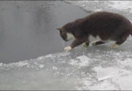 Кот ловит рыбу в проруби!