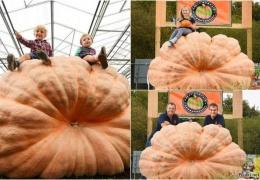 Братья-близнецы побили свой прошлогодний рекорд, вырастив тыкву весом 1030 кг