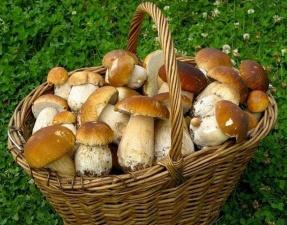 Миколог: сейчас в лесах Эстонии на пике второй слой белых грибов