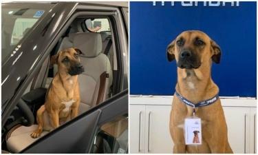 Пес часто бродил возле автосалона, и сотрудники решили его осчастливить