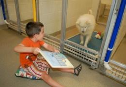 Дети читают вслух в приюте для животных, чтобы помочь запуганным и застенчивым собакам адаптироваться