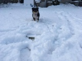 снежный покров на Сааремаа до сих пор не растаял