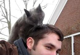 Почему кошки лижут хозяевам волосы?