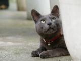 Очень классные фотографии кошек