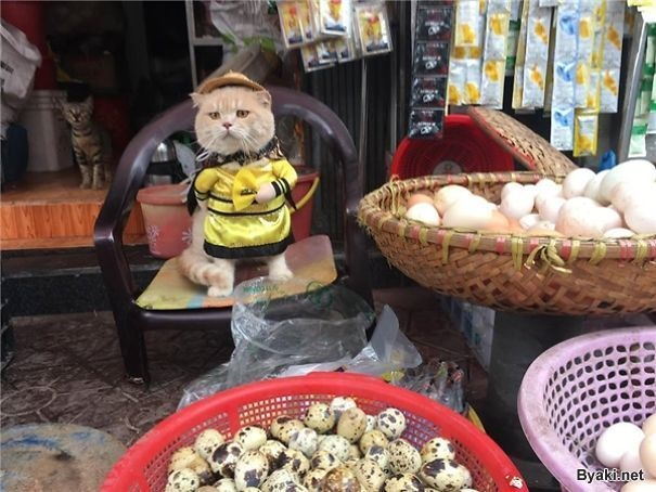 Пушистый уличный торговец - моднячий котяра по кличке Собака