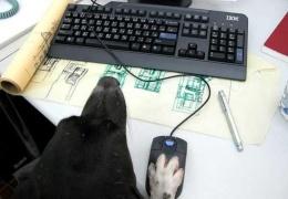Пёс инжинер
