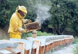 Почему дым «успокаивает» пчел?